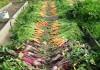 jardin monpotager