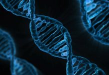 Brin d'ADN bleu