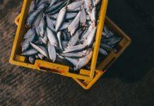 chiffres de la pêche