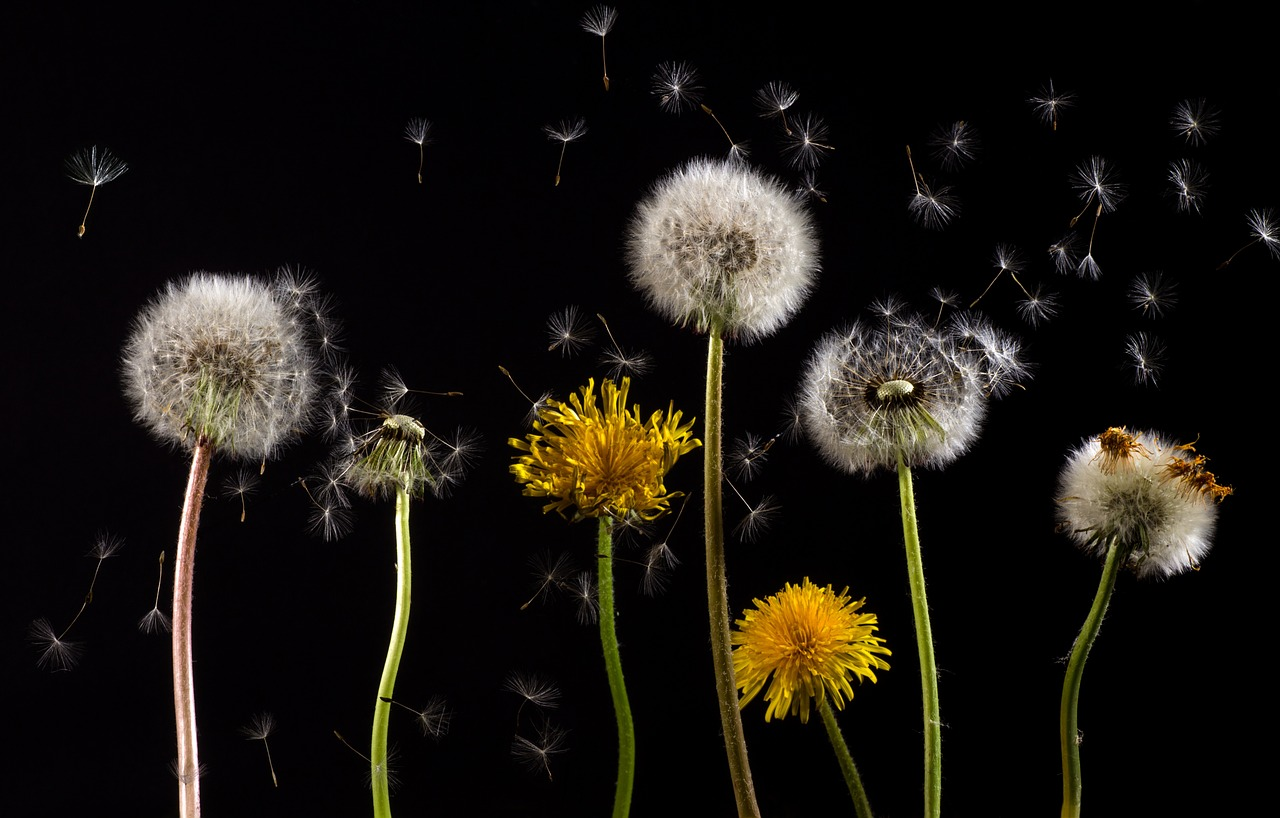 5 gestes pour chapper aux allergies au pollen consofutur. Black Bedroom Furniture Sets. Home Design Ideas