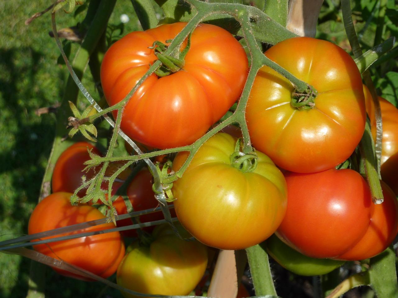 10 conseils pour un jardin sans pesticides consofutur for Conseil pour jardiner