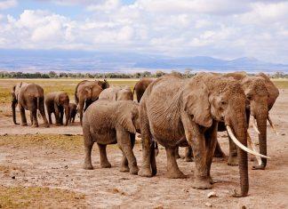 partir en écovolontariat pour soigner les éléphants d'Afrique
