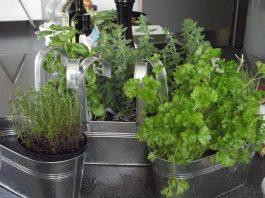plantes aromatiques sur balcon