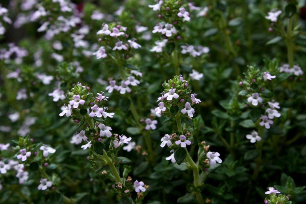 6 plantes pour affronter l'hiver - Consofutur