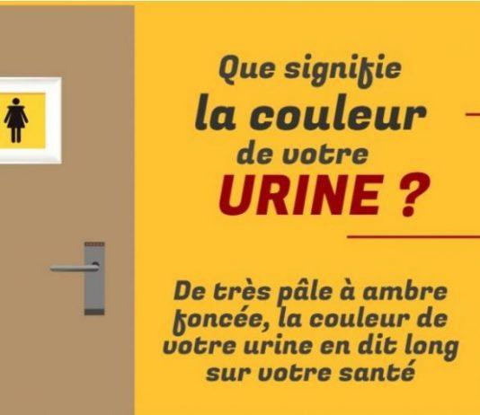 infographie urine
