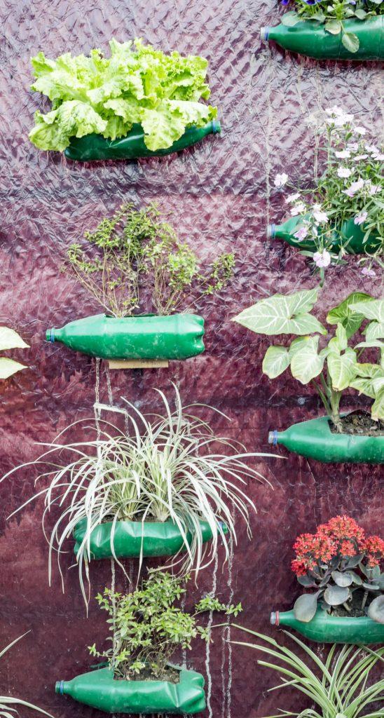 mur de bouteille végétal