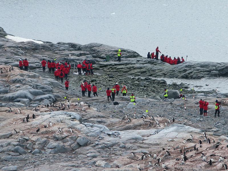 Tourisme en Antarctique Cuverville island