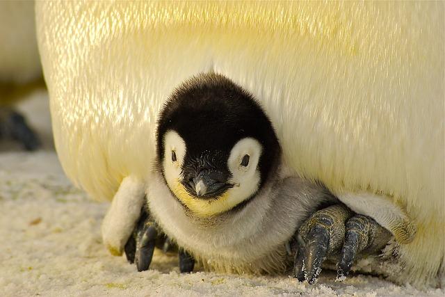 tourisme en antarctique comment ne pas craquer