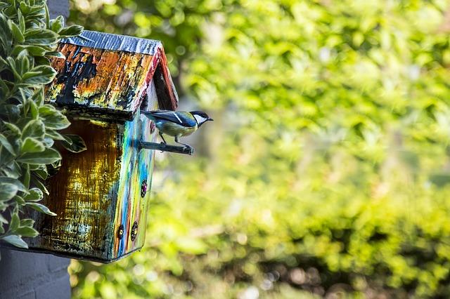 fabrique nichoir oiseau