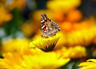 papillon biodiversité