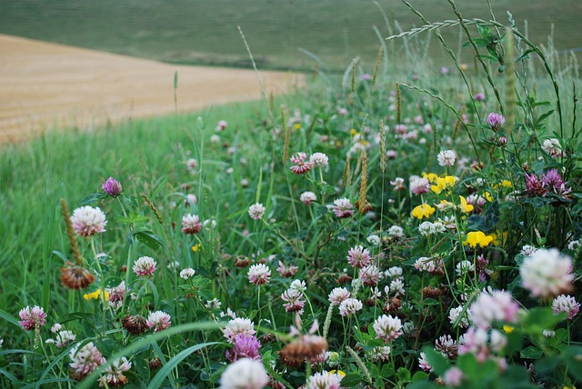 prairie biodiversité