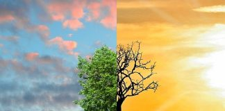 contribution à la lutte contre le réchauffement climatique