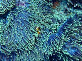 robots pour protéger les milieux marins