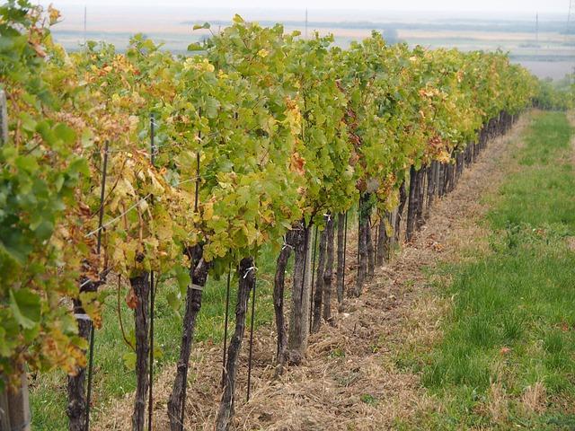 pas de sulfates dans le vin bio, mais des sulfites autorisées