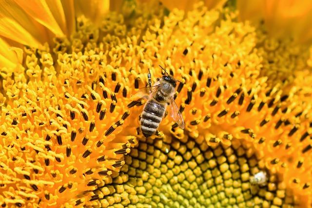 aider à sauver les abeilles