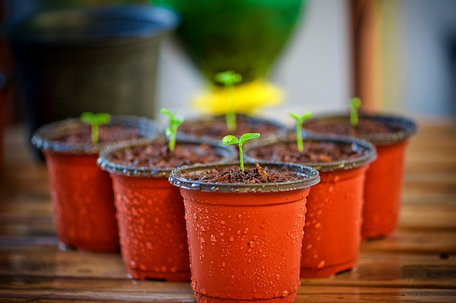 pots de fleurs en plastique pas écologiques