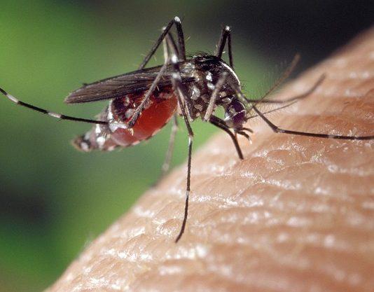 se soigner contre les moustiques naturellement