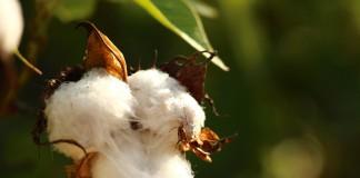 textile bio coton bio