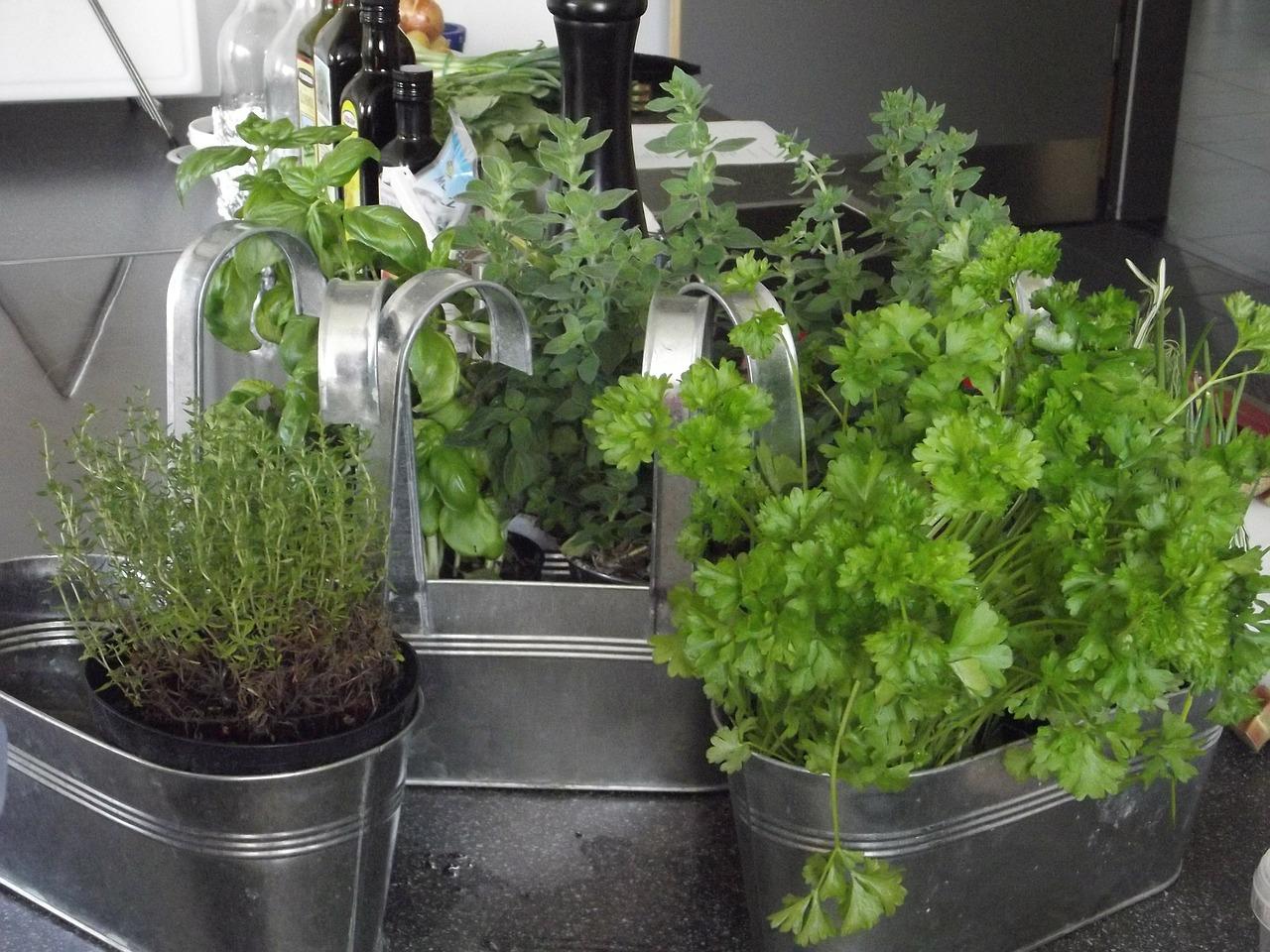 Planter Herbes Aromatiques Jardiniere un jardin aromatique sur son balcon - consofutur