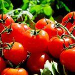 éplucher les tomates