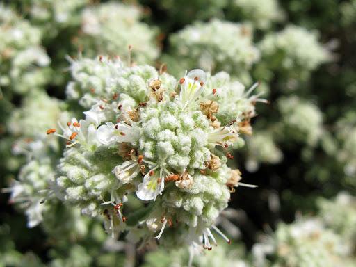 plante insolite senteur originale