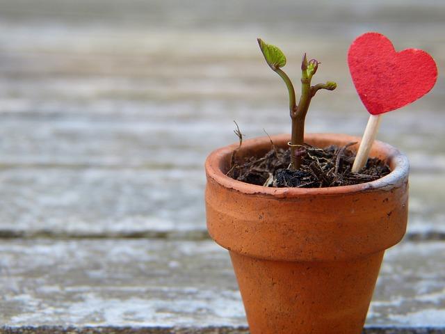 pots de fleurs écologiques