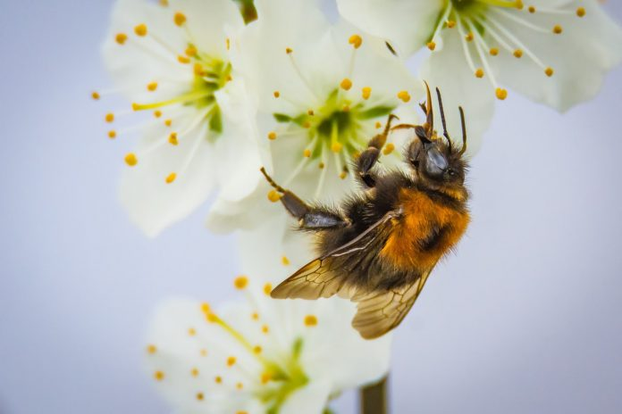 abeilles biodiversité