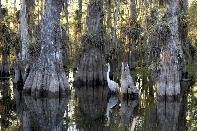 biodiversité dans la mangrove