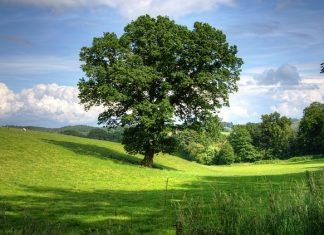 lutter contre l'artificialisation des sols