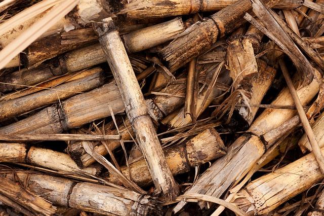 hydrogène vert biomasse