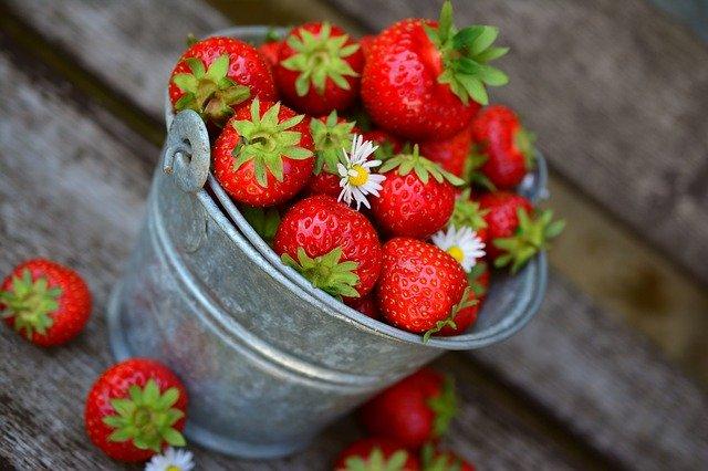 planter les fraisiers en août