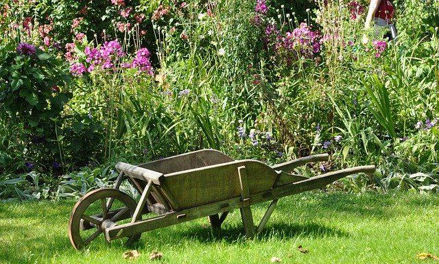 que faire au jardin en août