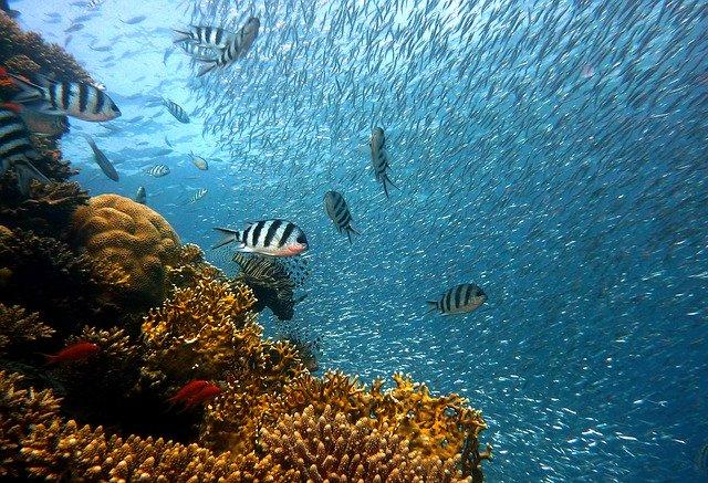 restaurer les océans espèces et habitats