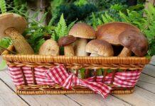 champignons fruits et légumes de novembre