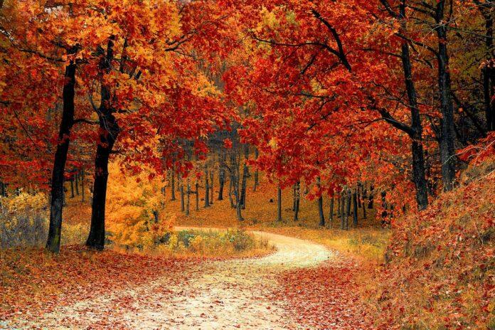 balade en forêt la nature nous fait du bien