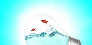 où travailler pour contribuer à la transition écologique